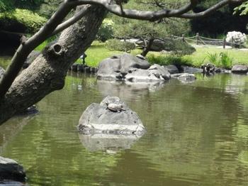 カメたちの池.jpg