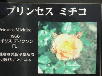 プリンセス美智子.jpg
