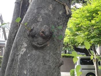 二本木に新芽が.jpg