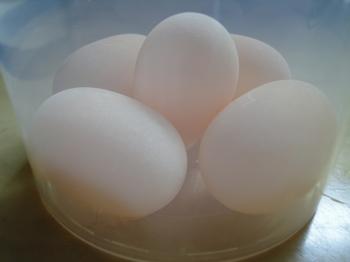 今日の卵.jpg