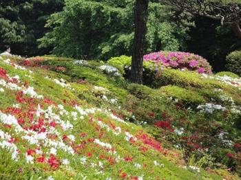 庭園のつつじ1.jpg