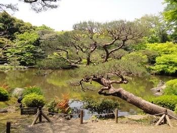 松の風景.jpg