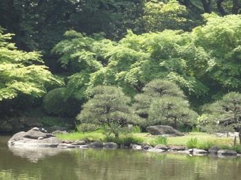 池の風景.jpg