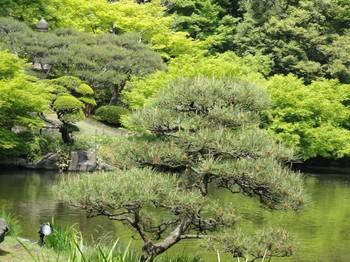 池の風景44.jpg