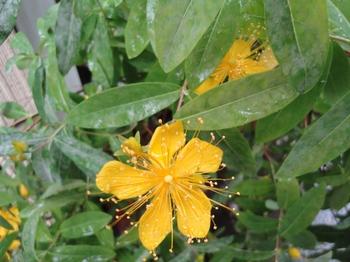黄色2.jpg